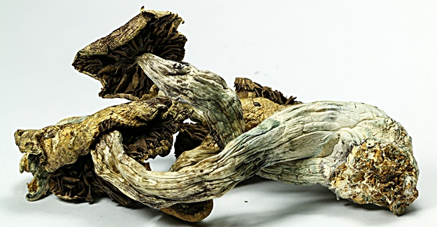 Can a Magic Mushrooms Compound Treat Depression?
