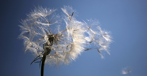 Allergy Treatments and Their Side Effects