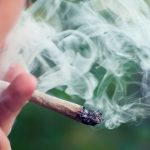 Marijuana Increases Traffic Deaths, a New Study Shows